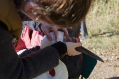 Питомник редких видов журавлей